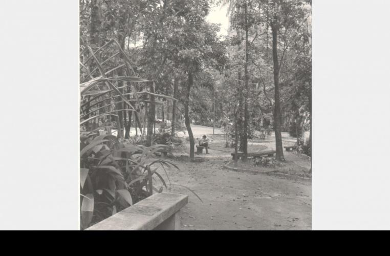 Bosque entre o antigo Ginásio Esportivo e o Edifício da Amizade, ainda com as trilhas com chão de terra. 1989. Fotógrafo Aníbal Mesquita. Acervo do Núcleo de Memória.
