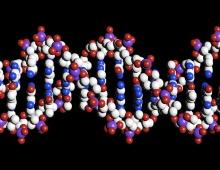 Representação da estrutura em dupla hélice do DNA