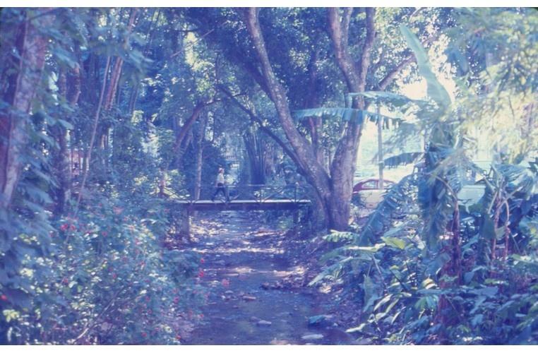 Ponte de madeira do Rio Rainha vista a partir da segunda ponte. c. 1985. Fotógrafo desconhecido. Acervo Núcleo de Memória.